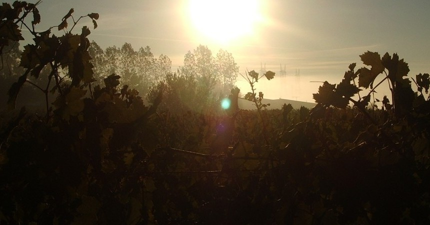 Comme ailleurs, dans le vignoble, les jours et les nuits se succèdent, souvent bien remplis...