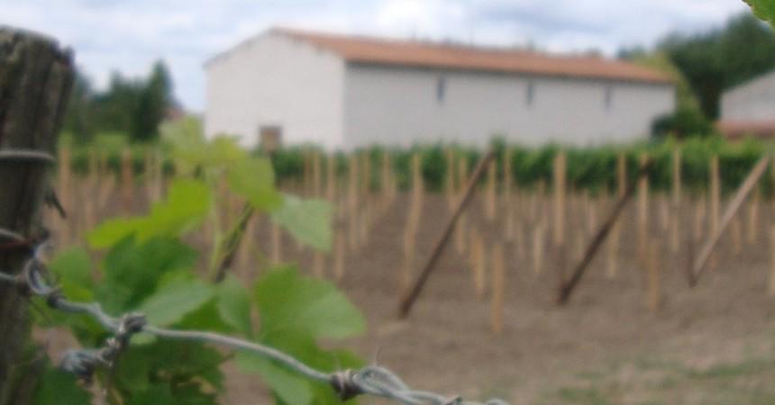 """Certains l'appellent """"Chateau""""... Pour nous, c'est le Domaine; plus modestement, et plus chargé d'une fière complicité vigneronne..."""