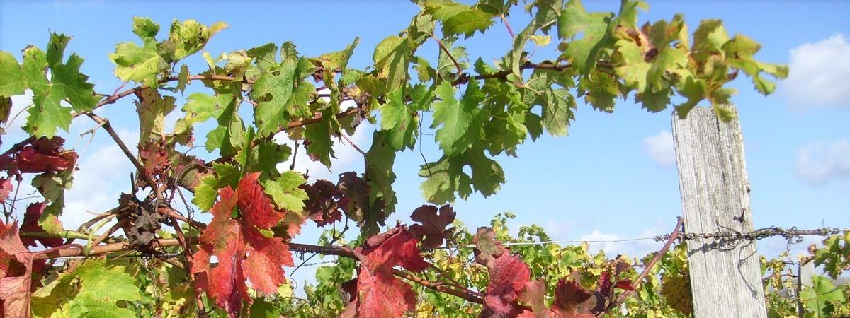 Permalien à: Feuillage d'automne