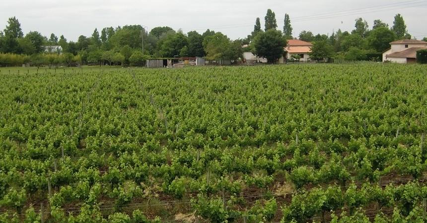 Il ne faut surtout pas oublier qu'un bon vin jailli d'un bon vignoble, d'un bon terroir, mené par de bons vignerons....